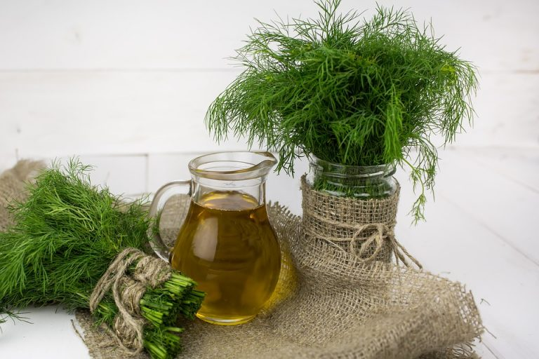 Rapeseed Oil – Good or bad? 4 myths about rapeseed oil.