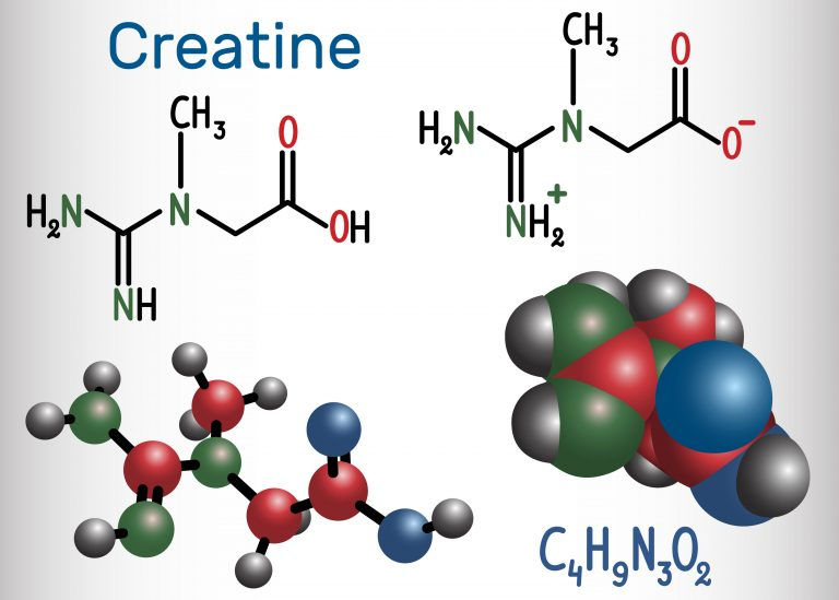 Creatine molecule. Structural chemical formula and molecule model. Vector illustration