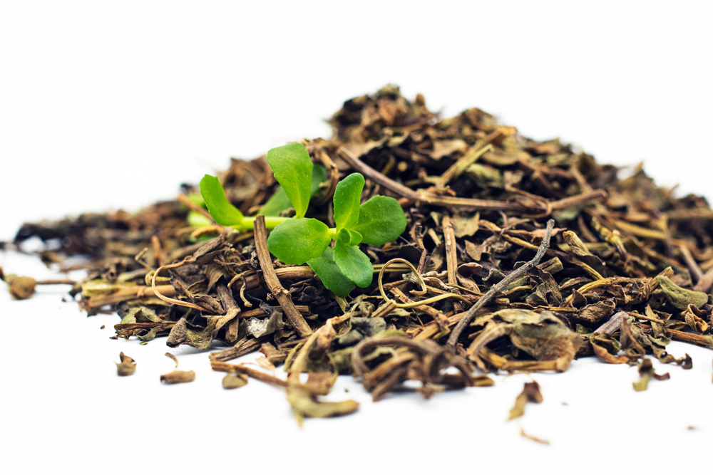 Traditionally, Brahmi was used as a modern tea - infusions was made with it. That's how many traditional herbs showed their actions at first place!