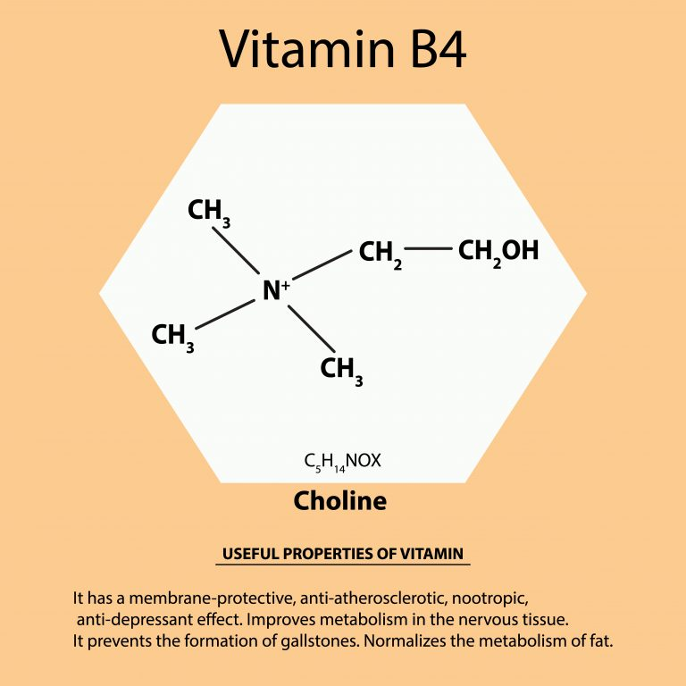Choline – characteristics of individual forms