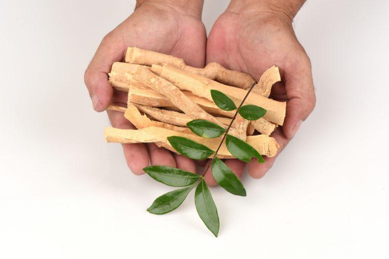 Eurycoma Longjack – Ginseng Malaysian- nectar of gods?!