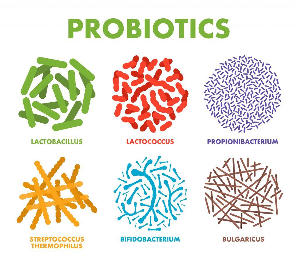 Different strains of good bacteria - probiotics