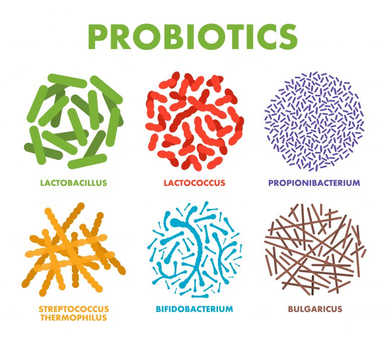 Different strains of good bacteria - probiotics