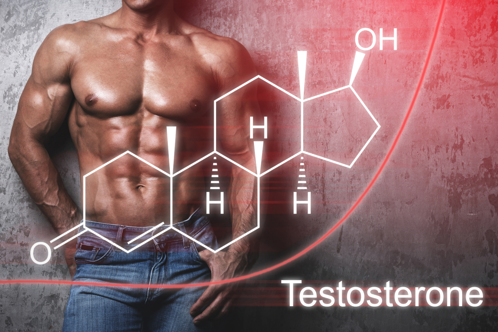 Optimal testosterone level is the most crucial thing in building muscle mass