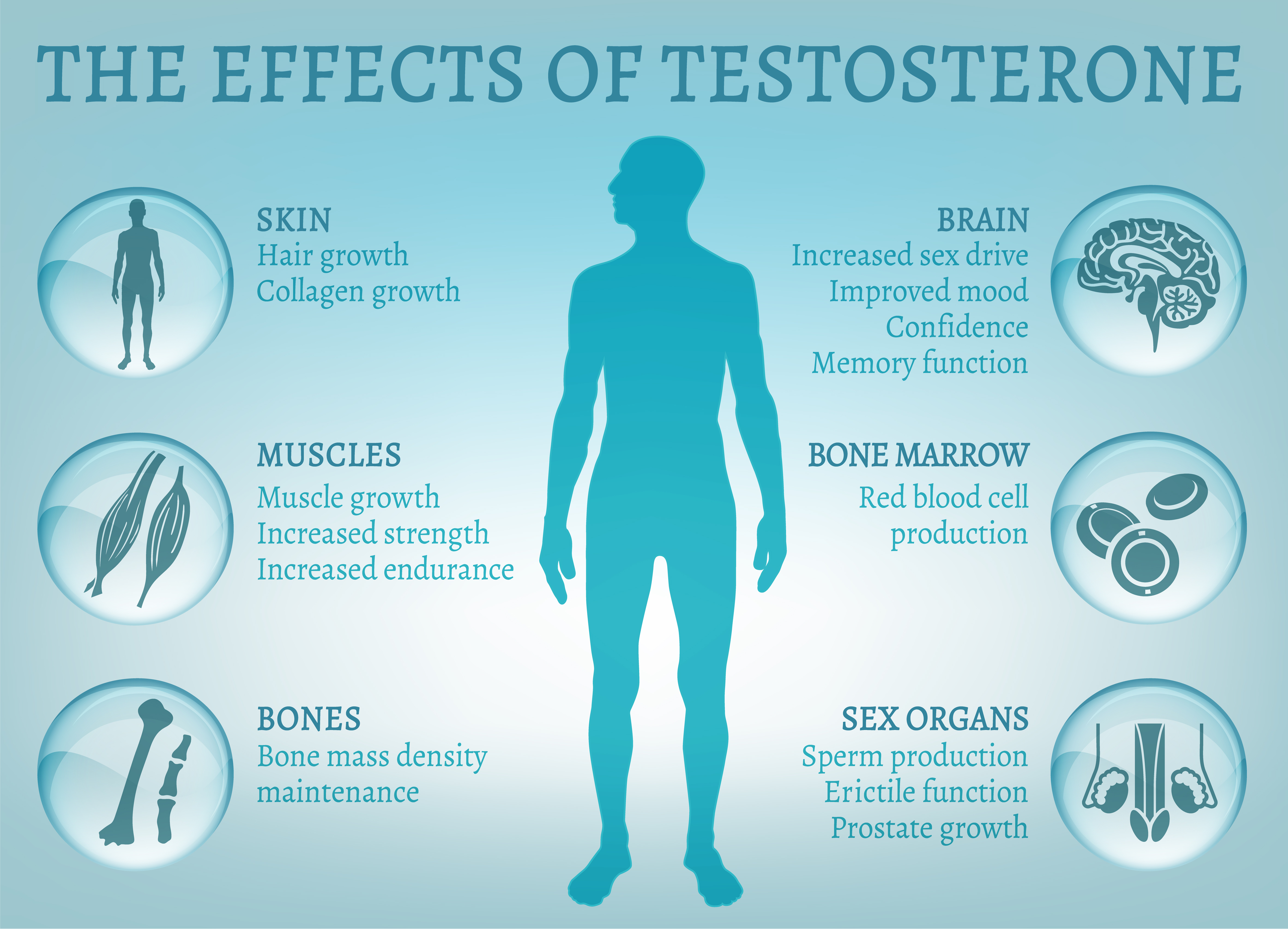 Benefits and actions of testosterone - infographic
