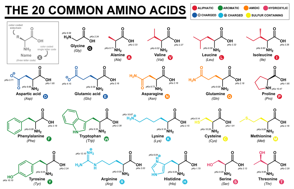The set of 20 basic amino acids,necessary for proper functioning of our organism.