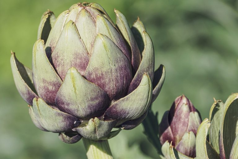 Artichoke leaf extract enriched with luteolin in relieving the metabolic syndrome