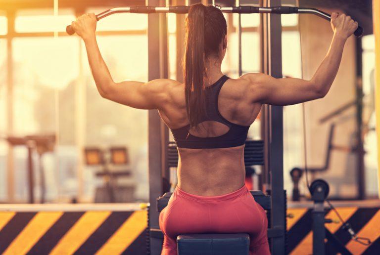 Back muscles – compedium