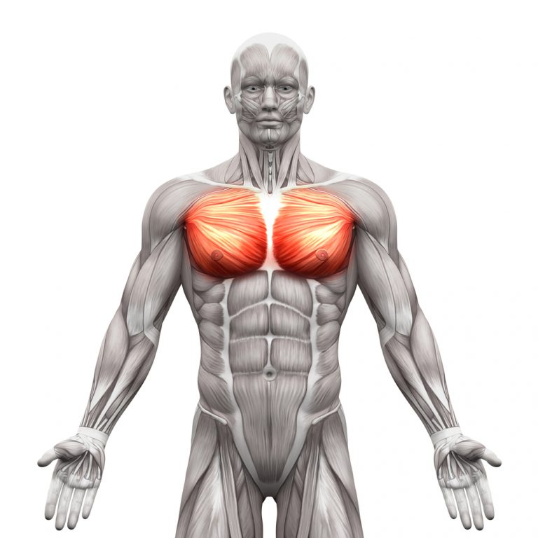 Chest muscles – how to build them properly?