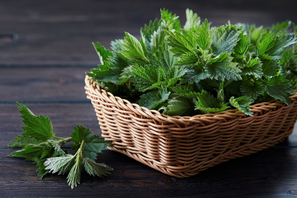 Stinging Nettle is probably the most known and effective natural diuretic!