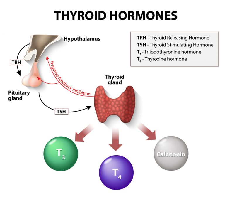 T2 or diiodothyronine – a basis of thyroid metabolism