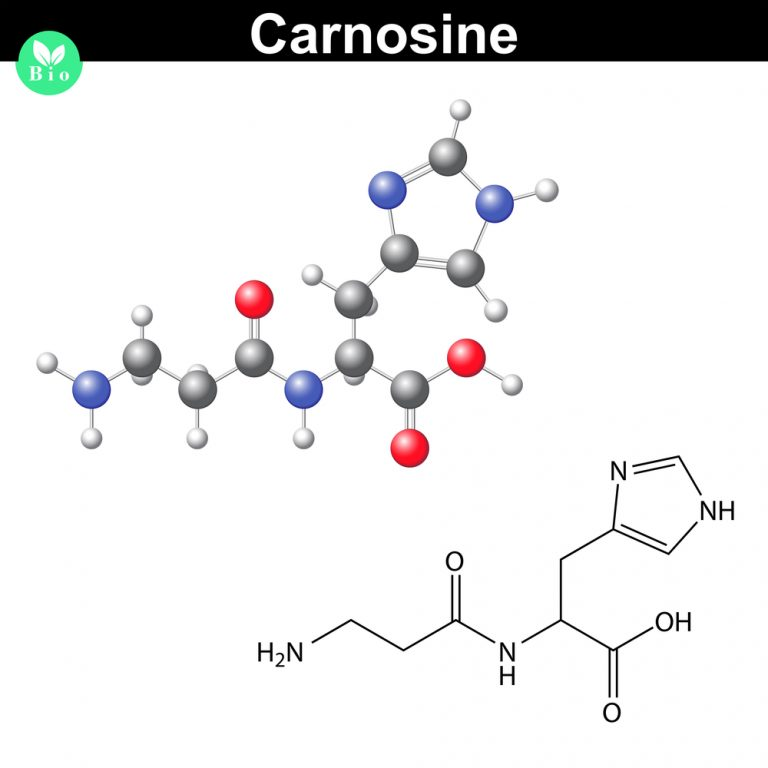 Bodyguard of vitality – word about carnosine