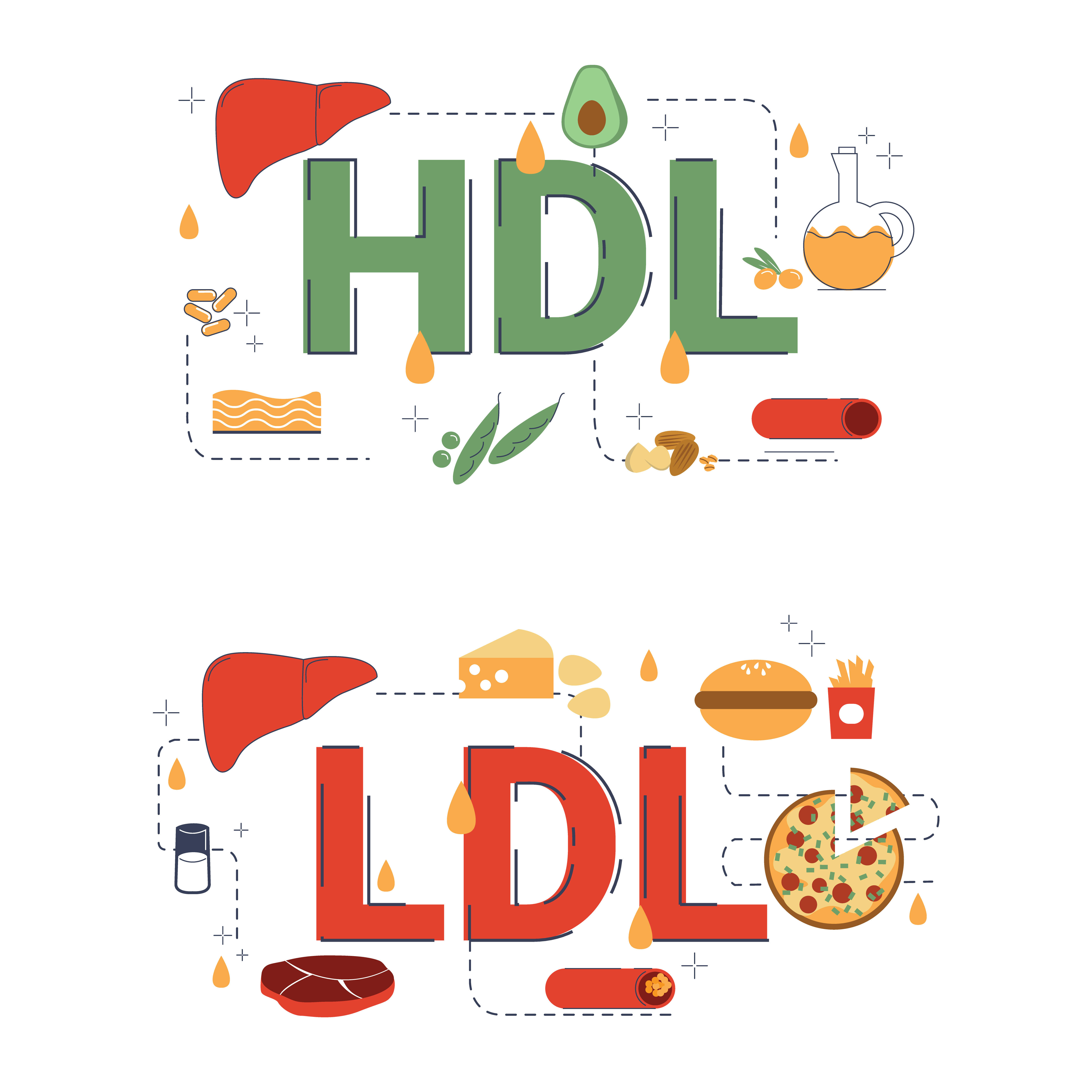 Which products increase HDL level, and which products increase LDL level?