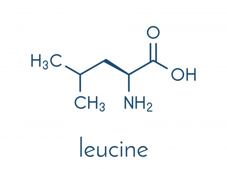 The leucine threshold