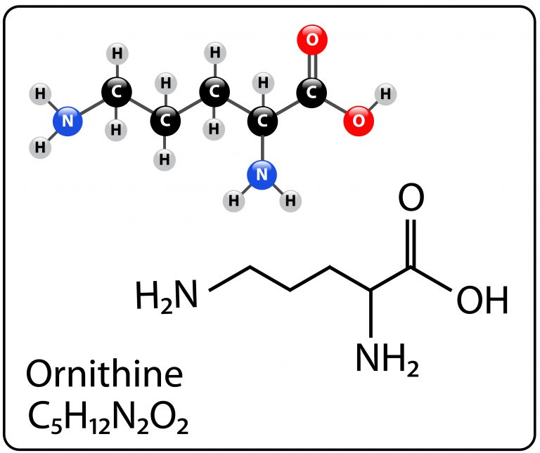 Ornithine – what's the action?