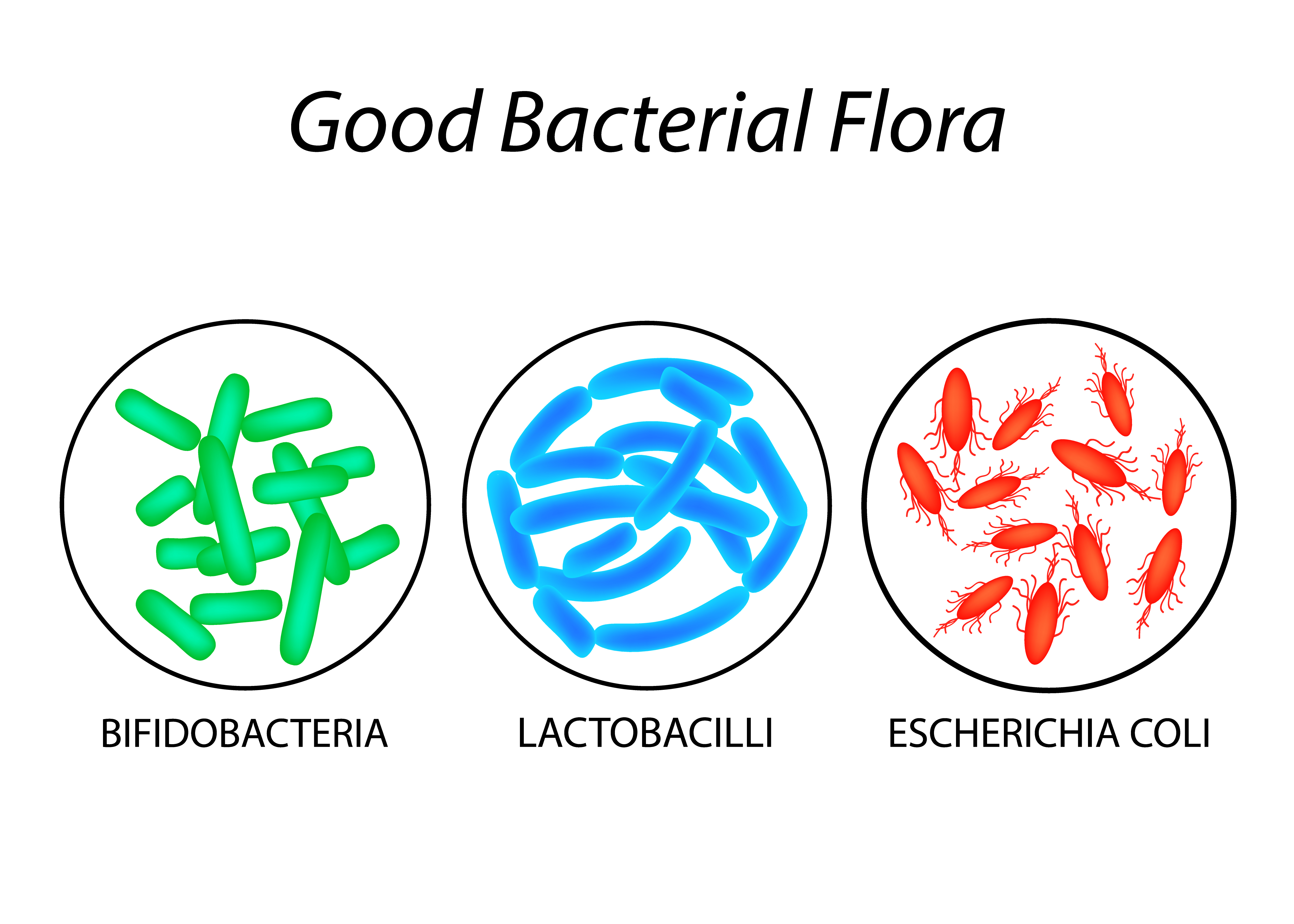The most important probiotics are thsoe from groups Lactobacillus, Bifidobacterium and Escherichia