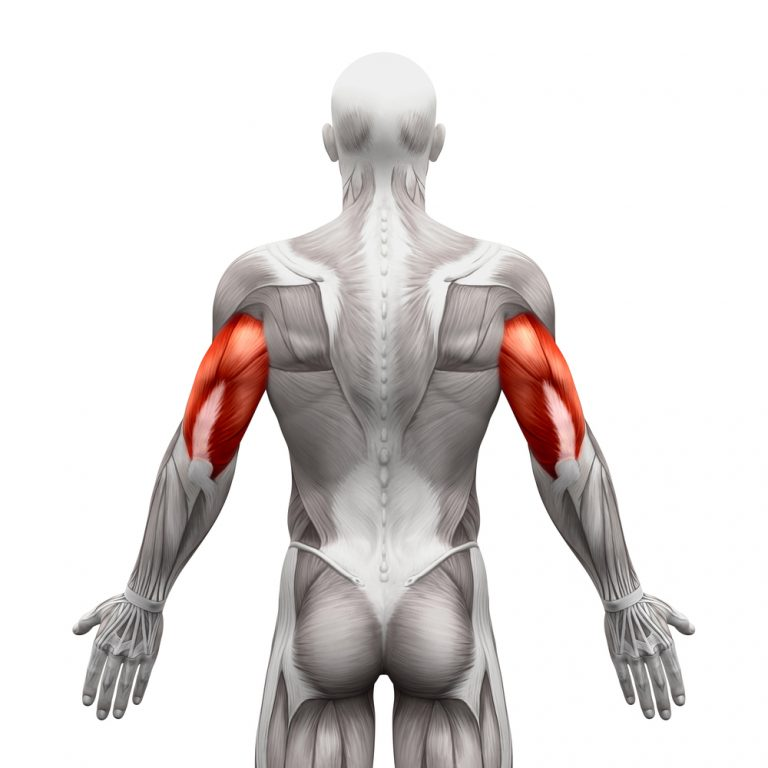 Tips for triceps training