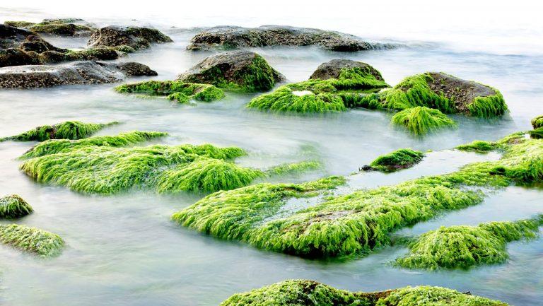 The beauty of seaweed