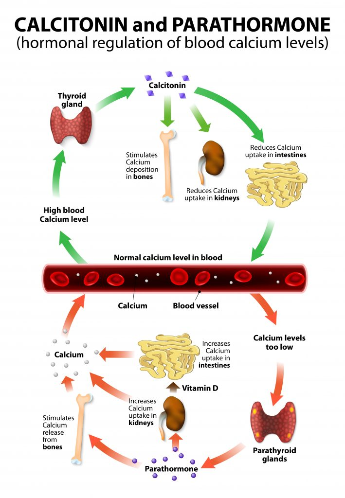 Calcium Phosphorus Parathyroid Hormone And Vitamin D Basic Information
