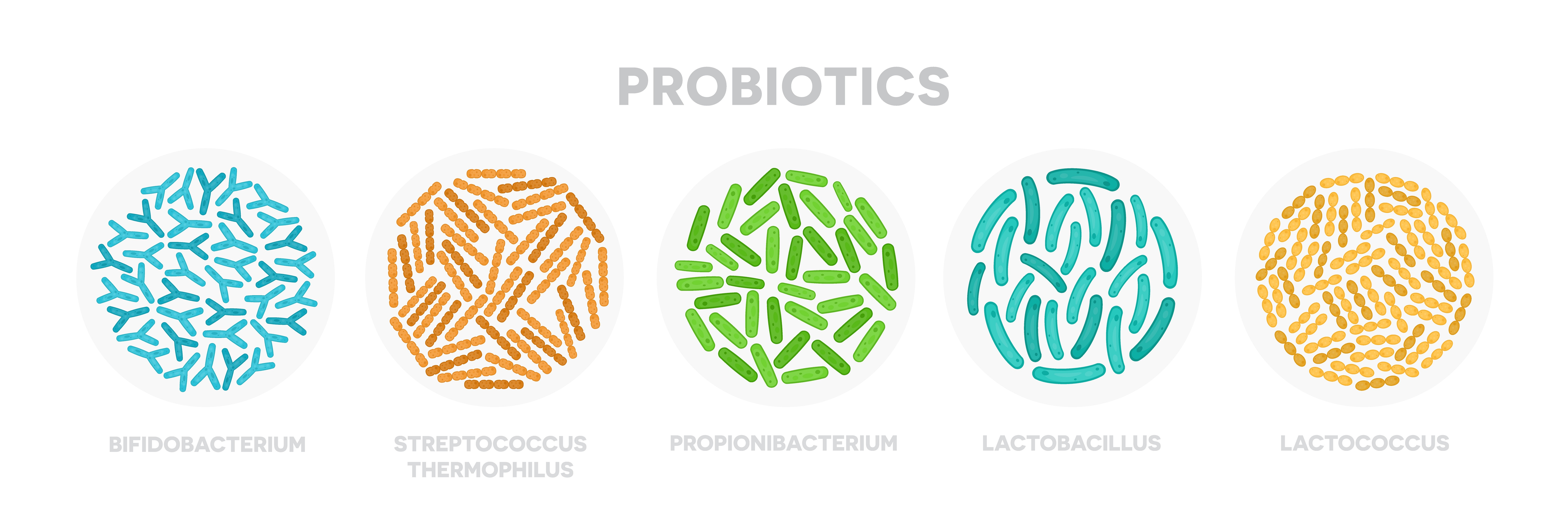 The most popular species of probiotics