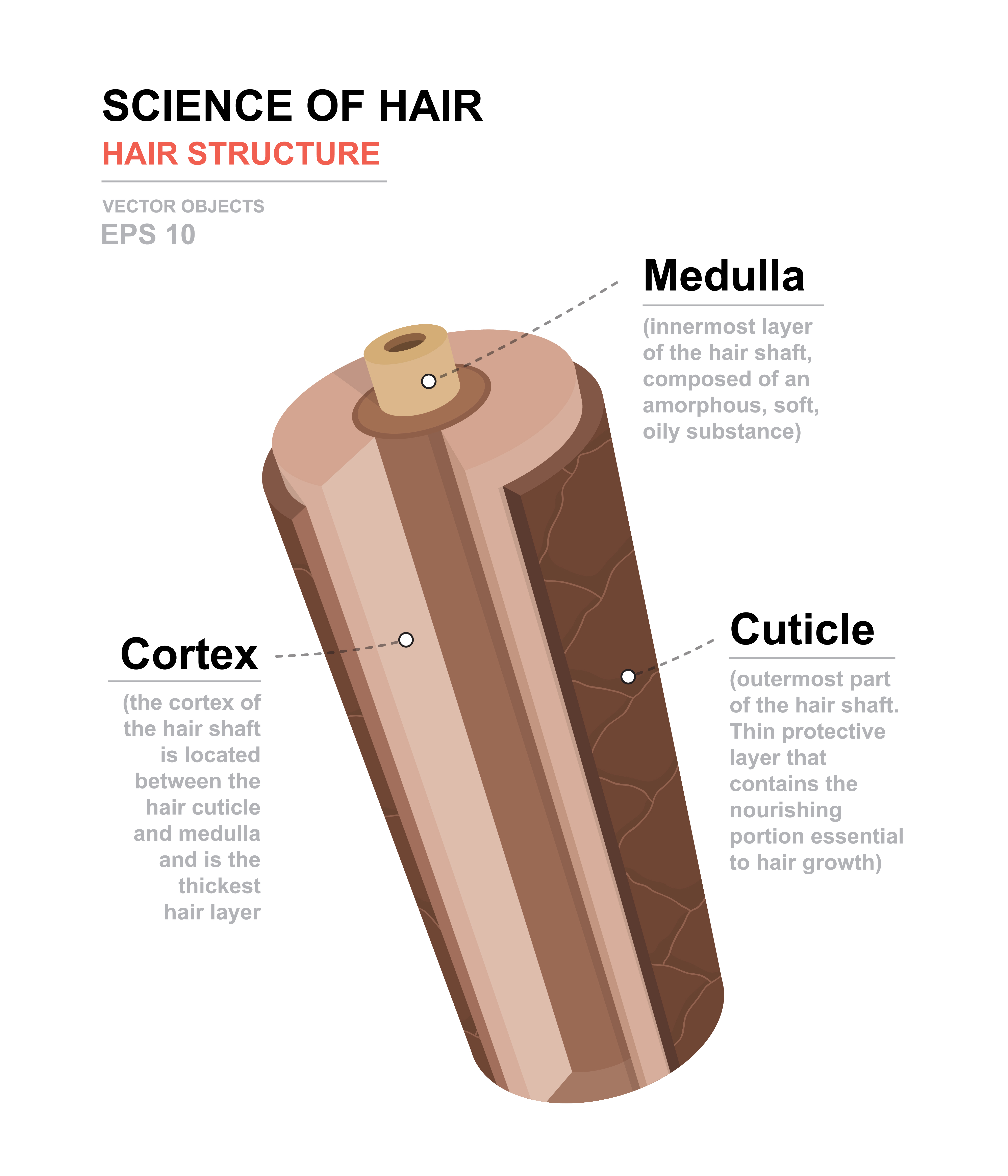 Structure of hairs