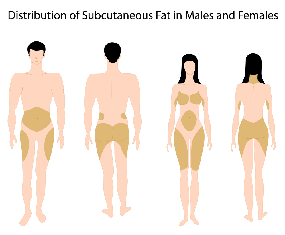 How fat is distributed throughout our bodies?