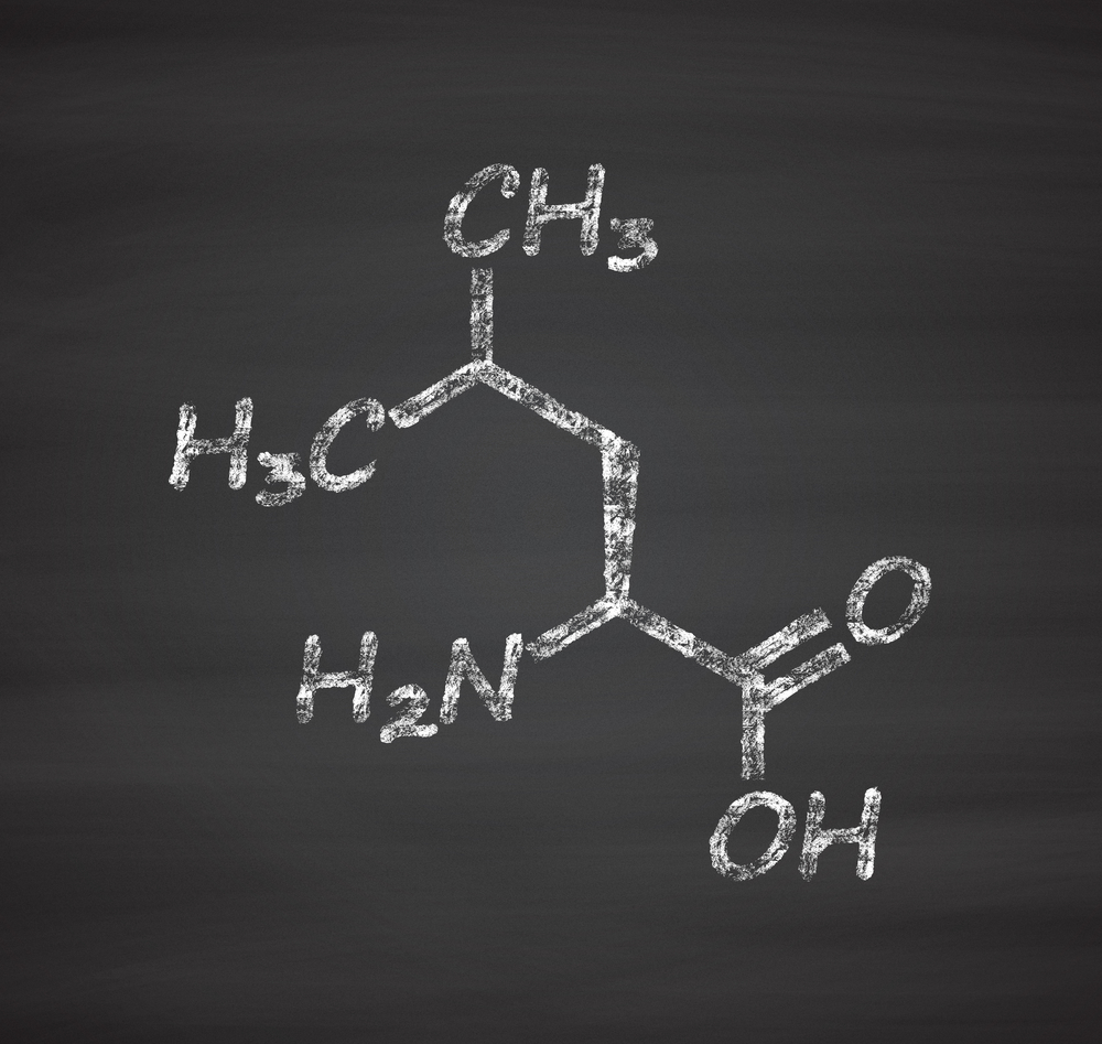 Leucine - the most important amino acid in BCAA formulation