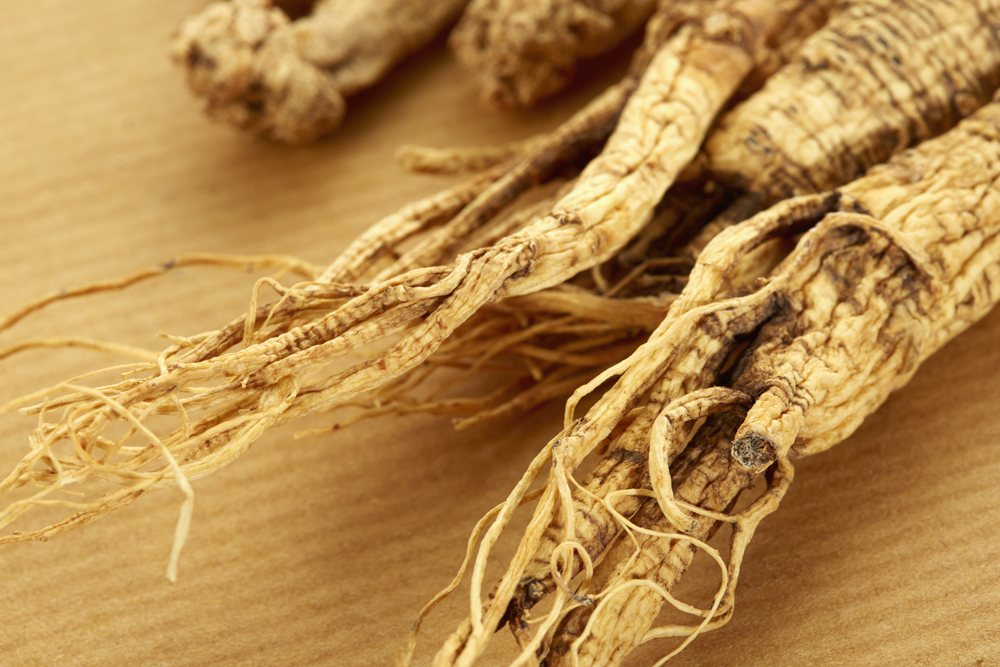 Root of Panax Ginseng