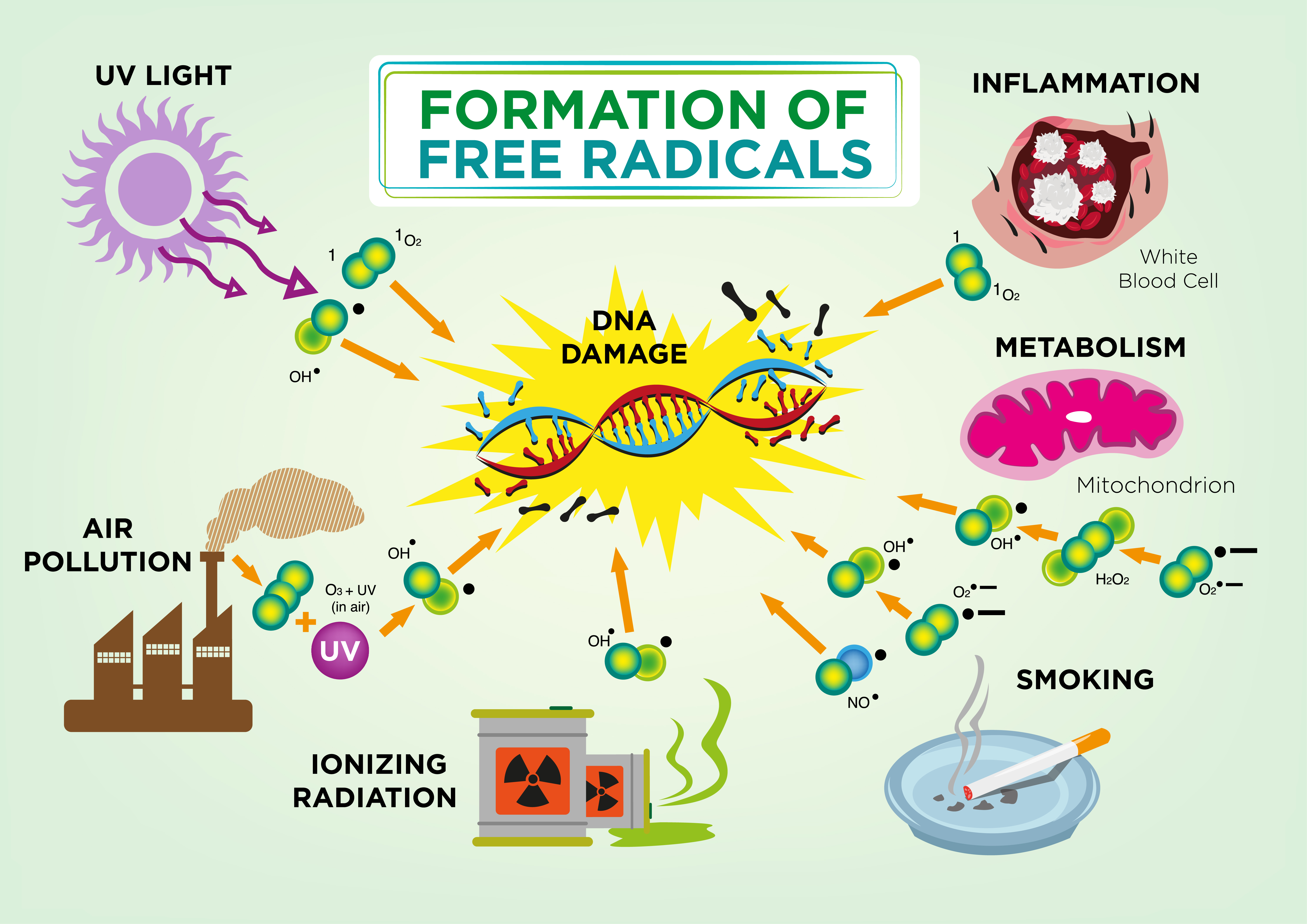 How free radcials are created?