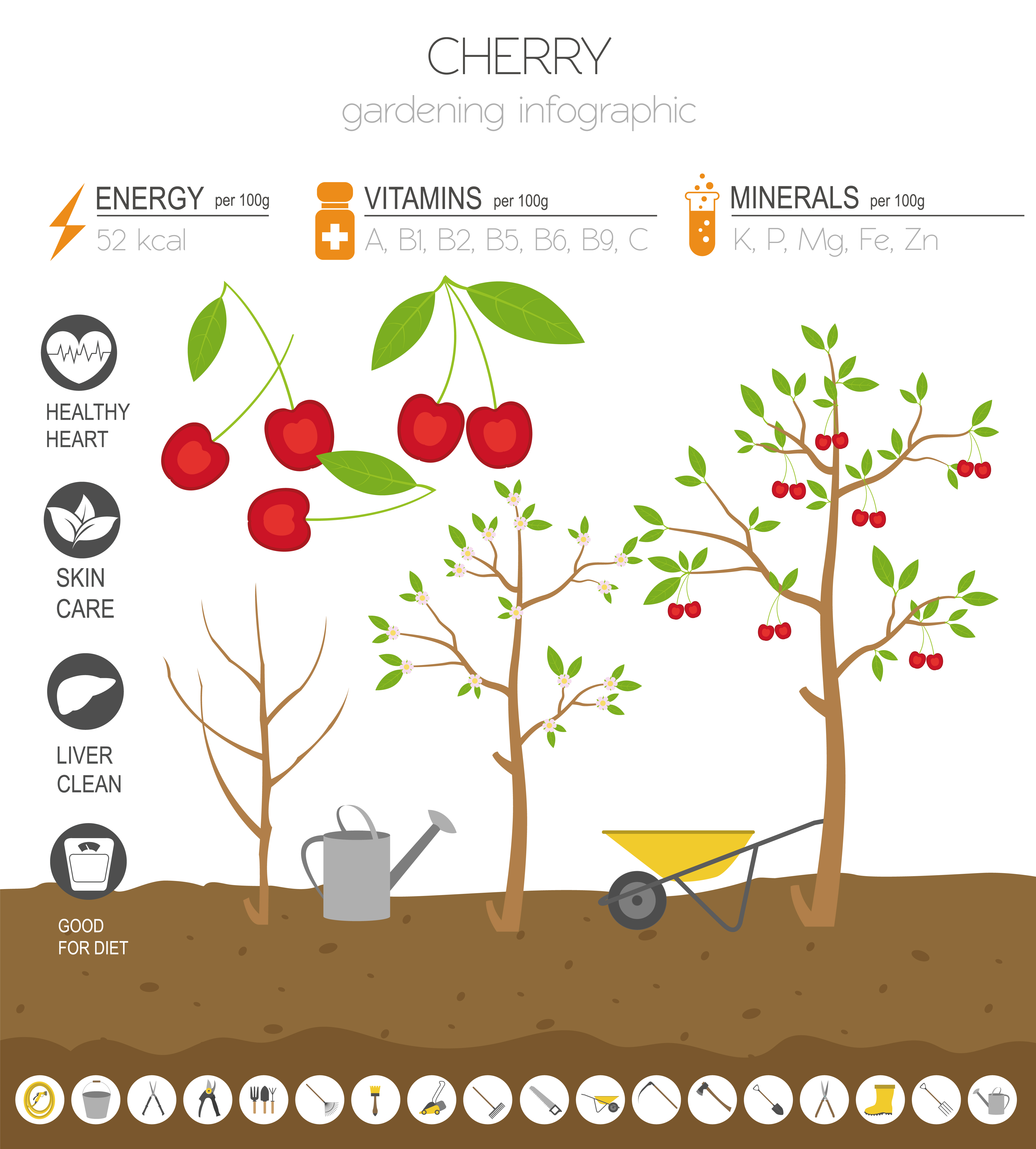 Basic information about cherries