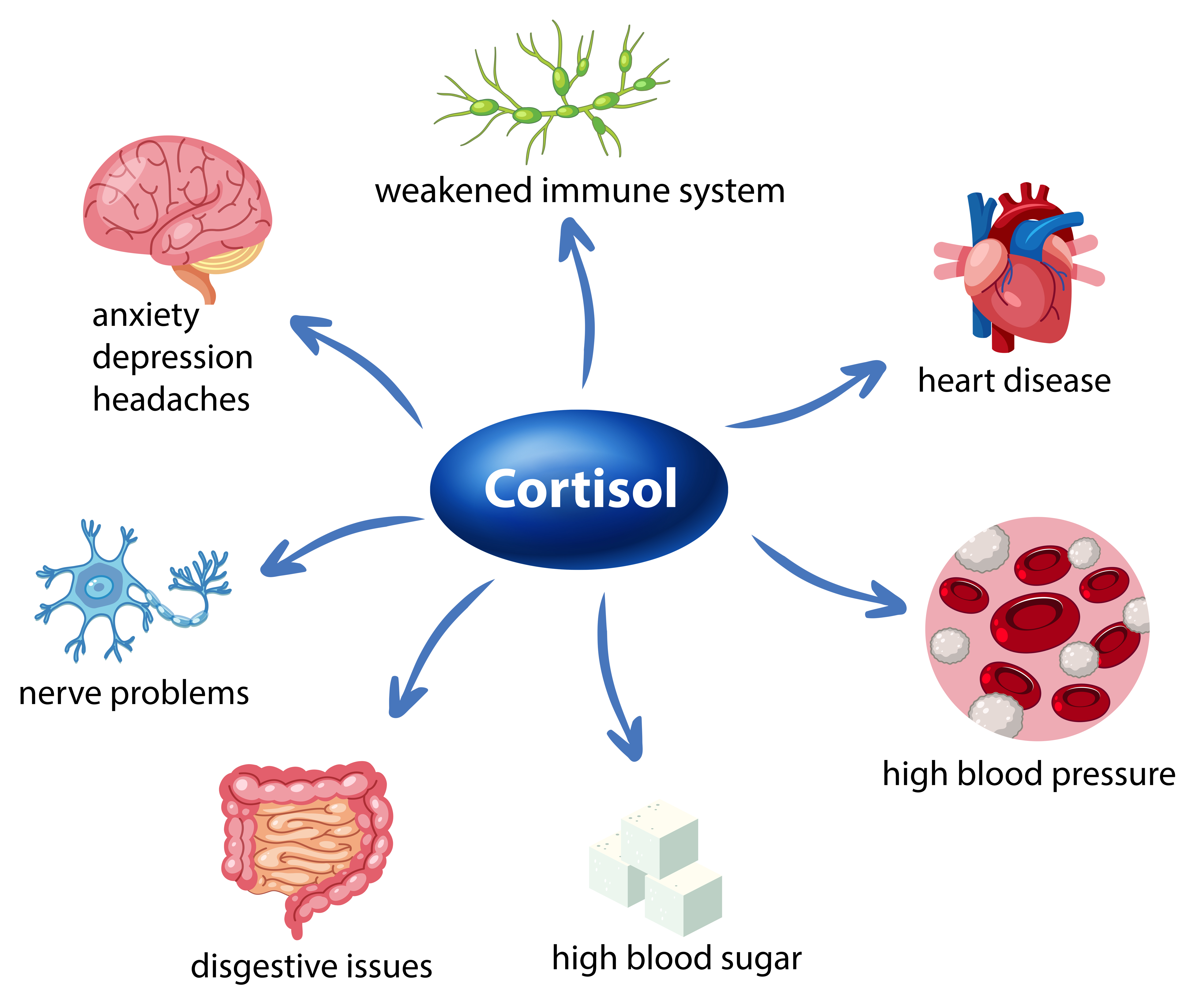 Effects of excessive cortisol level
