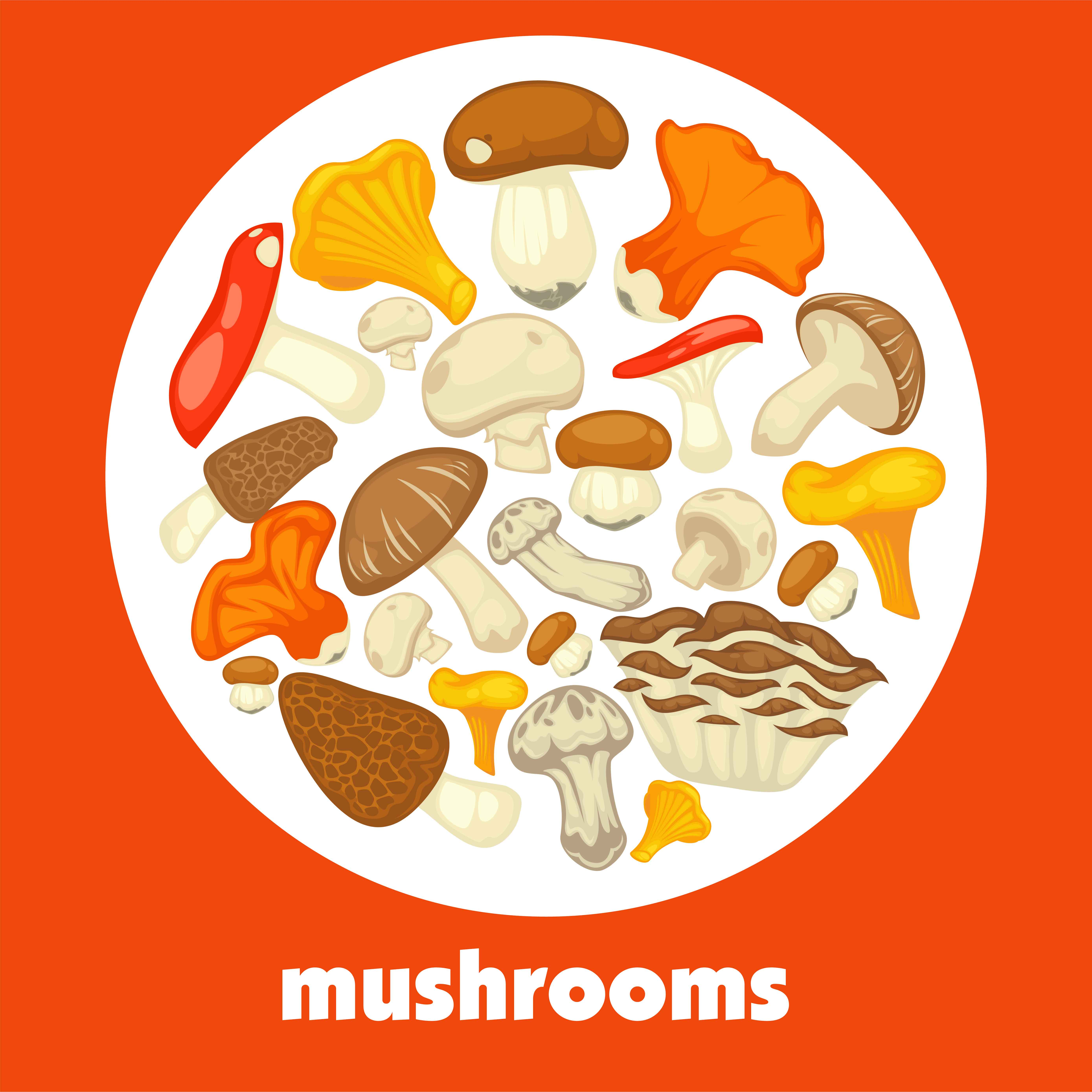 And are you eating mushrooms? Which are your favourite ones?
