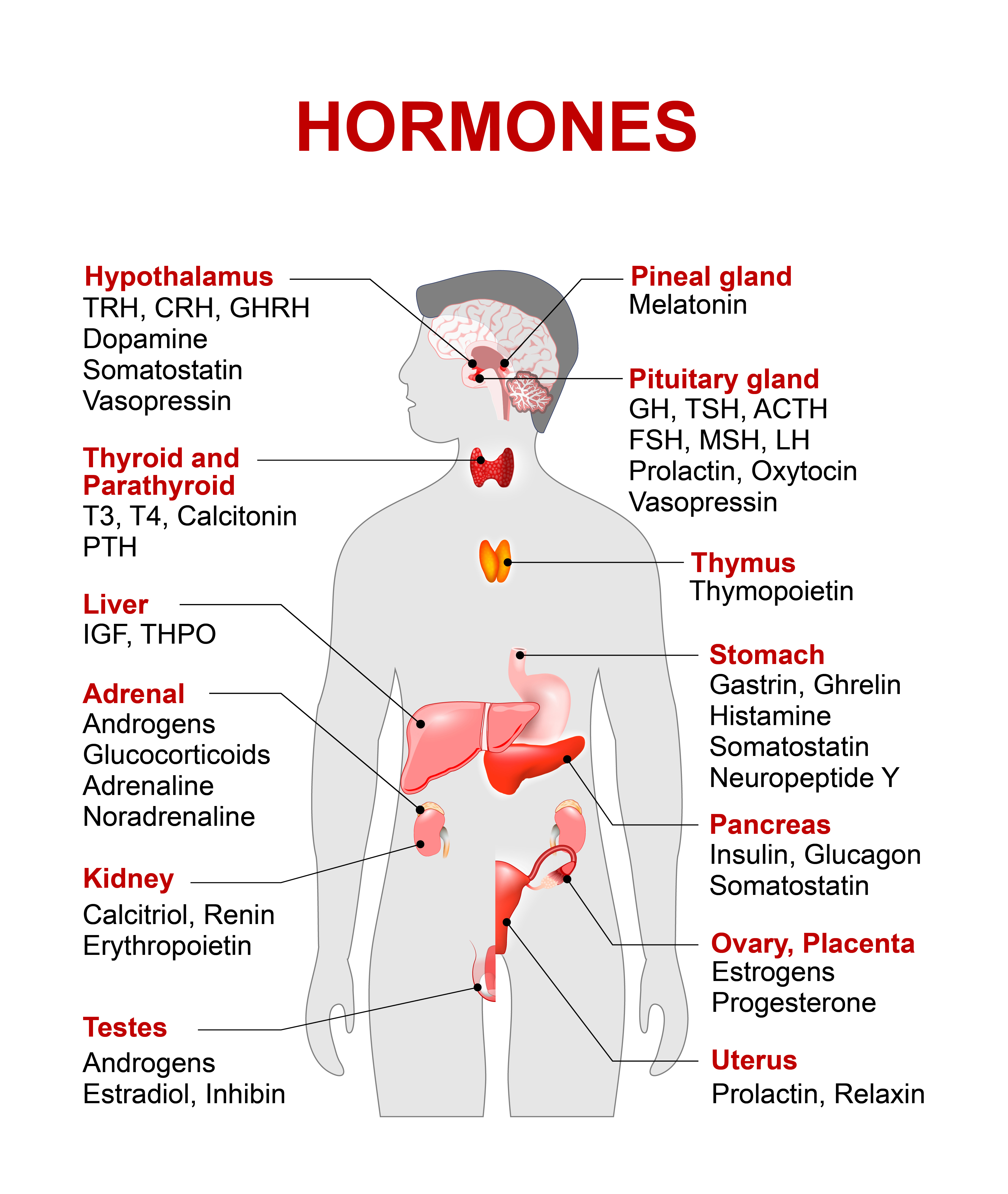 You have to be aware that the hormonal system is probably the most complicated one in our body. Just look how much of it is there!