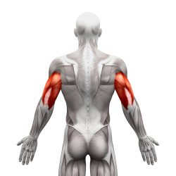 The Best Exercise for great triceps!