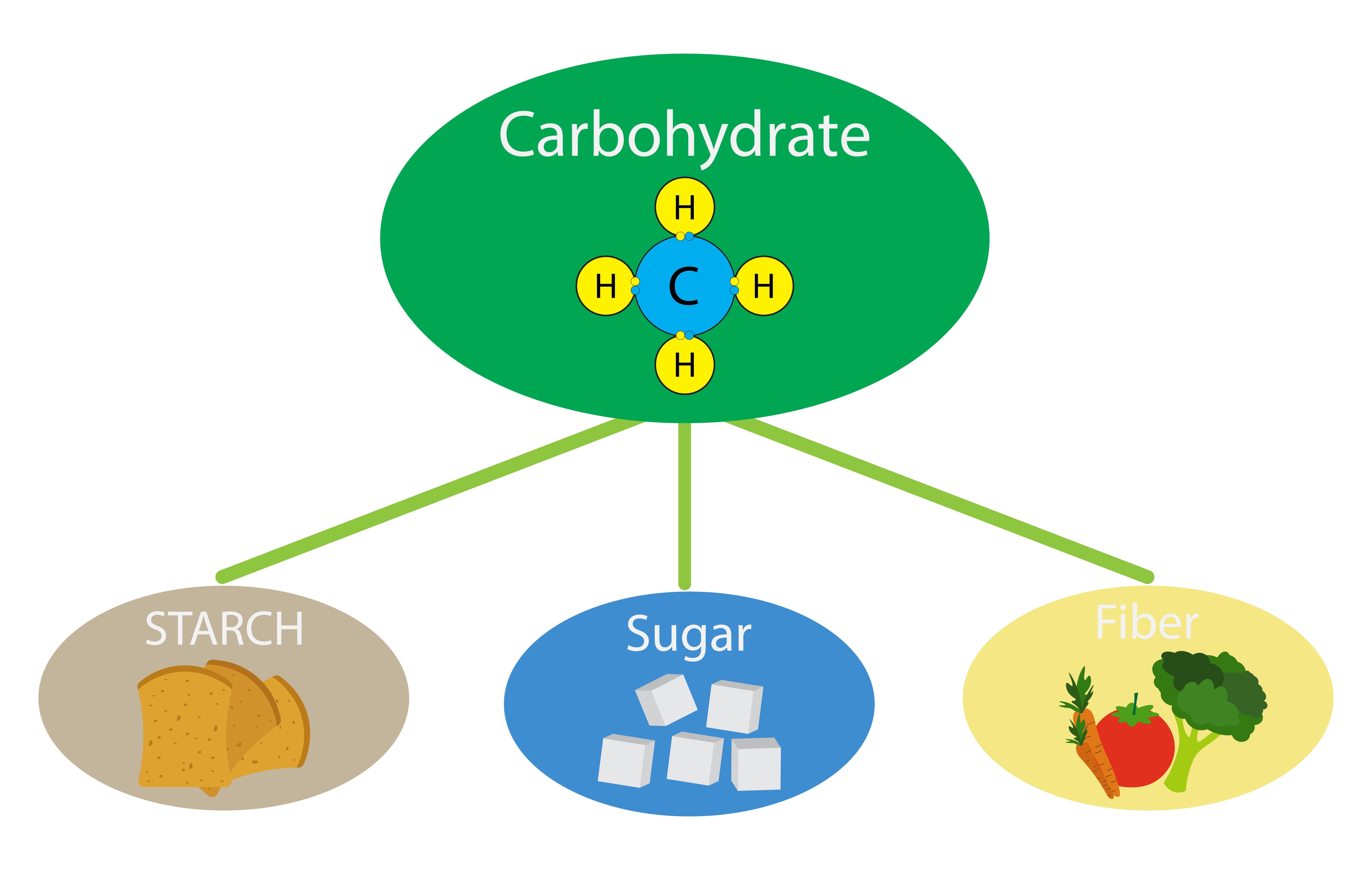 Three most common types of carbohydrates - dietary fibre, sugar and starch!