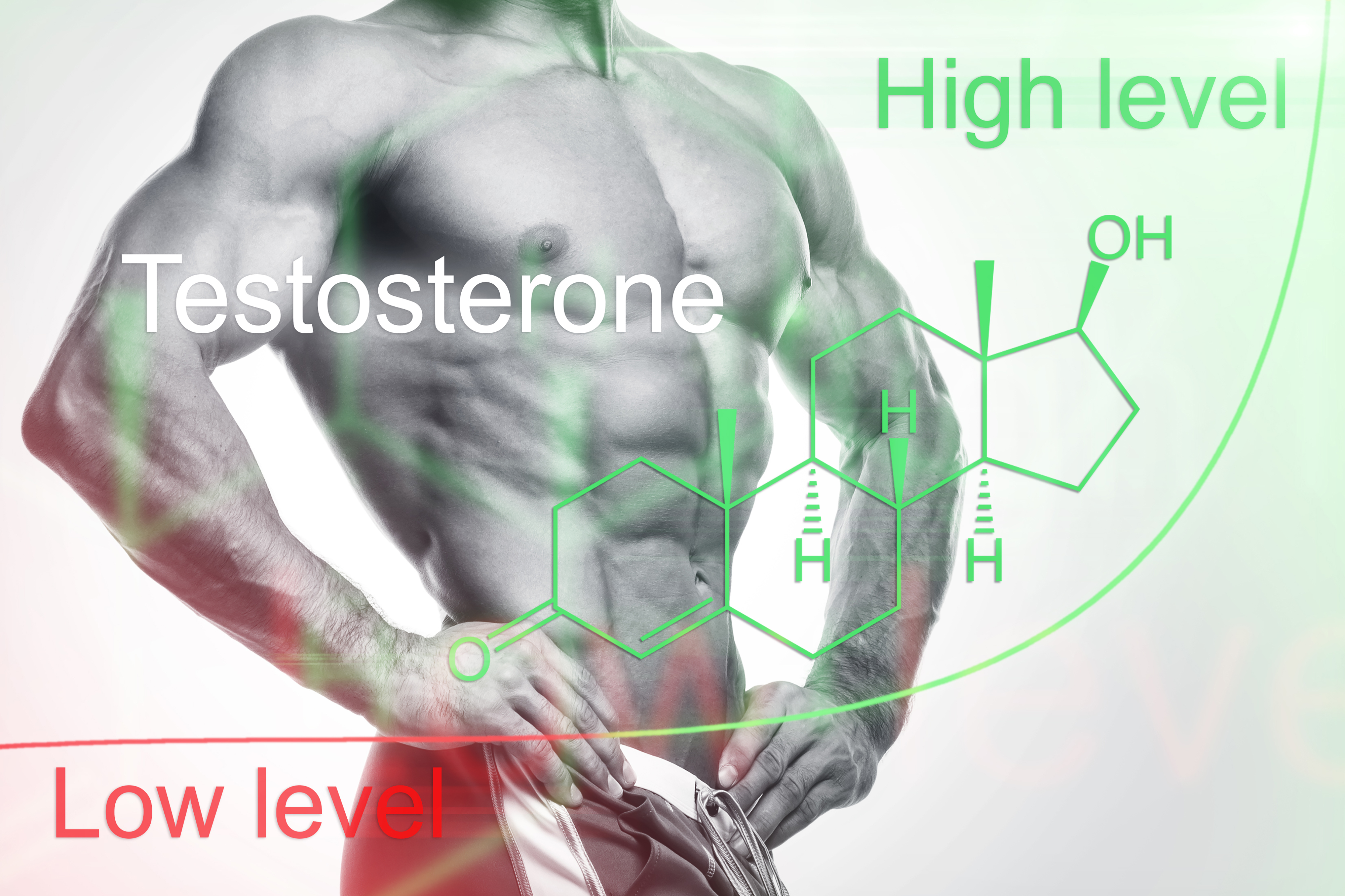 Testosterone is your muscles best friend!