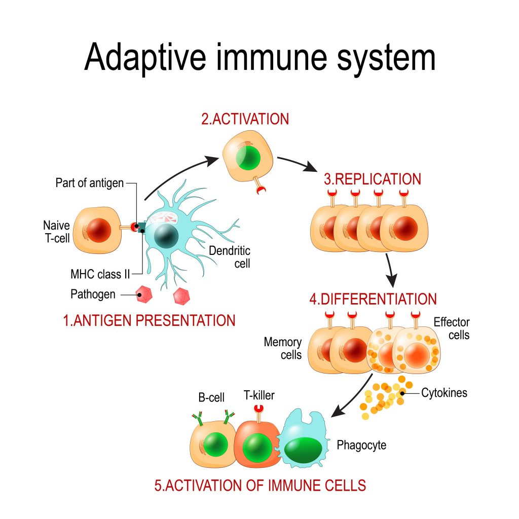 How does our immune response look like?