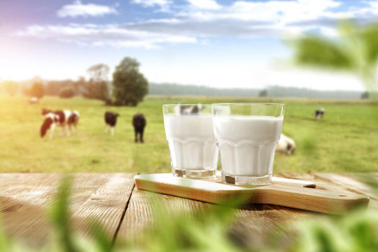 Should you drink milk?