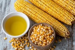 Corn oil – an American treasure?