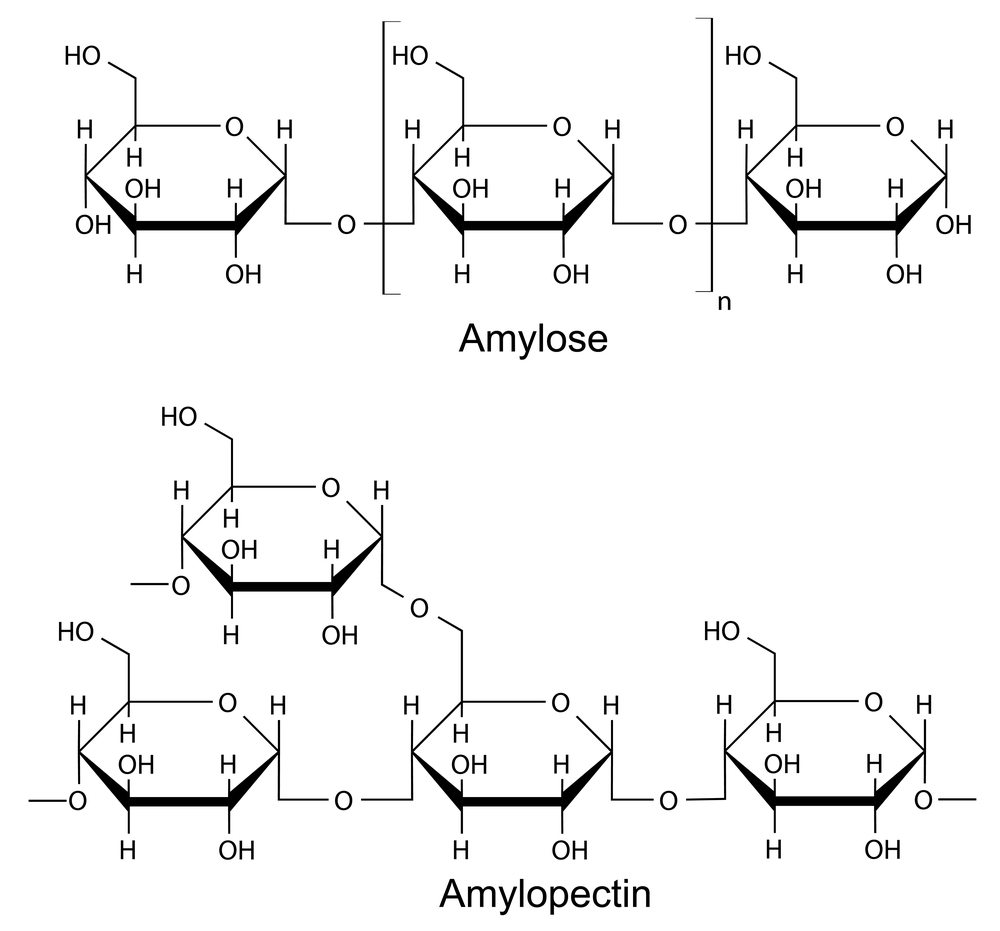 Two parts of starch - amylose and amylopectin
