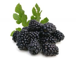 Treasure of forest – blackberries