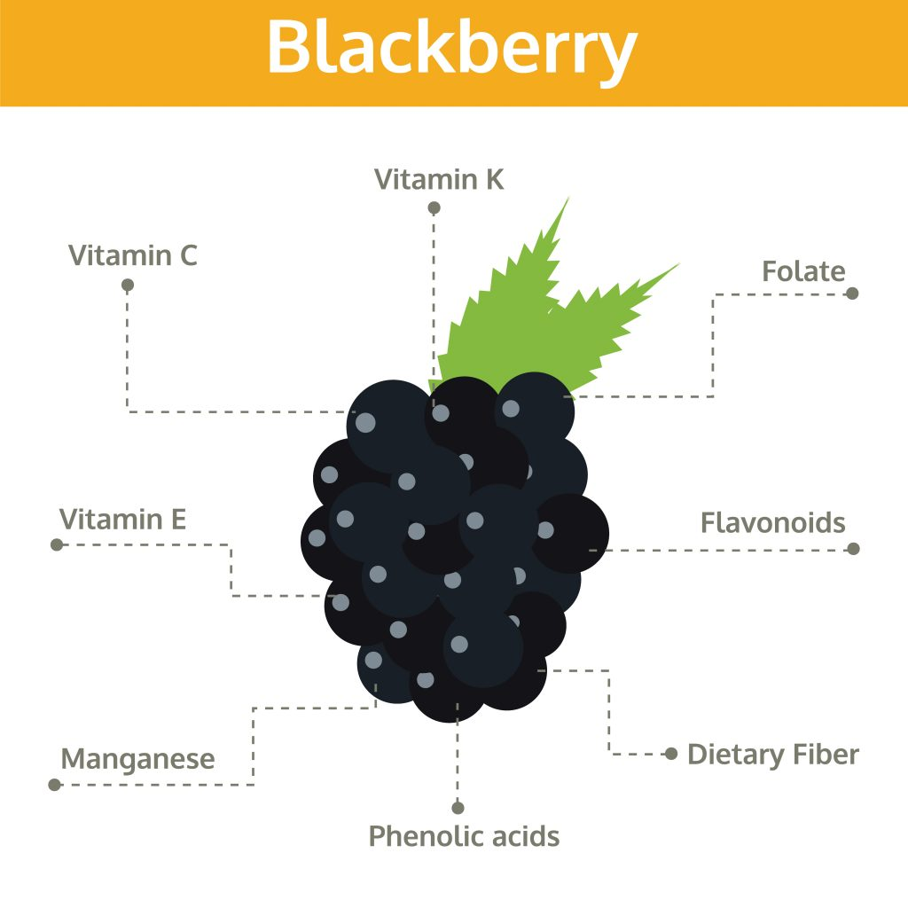 What do blackberries contain?
