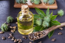 Castor oil – a dangerous remedy!