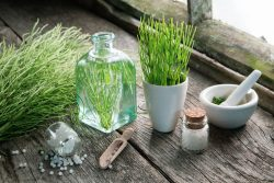 Horsetail – how does it work and how to use it?