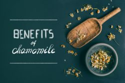 Chamomile – properties and usage in medicine and cosmetics