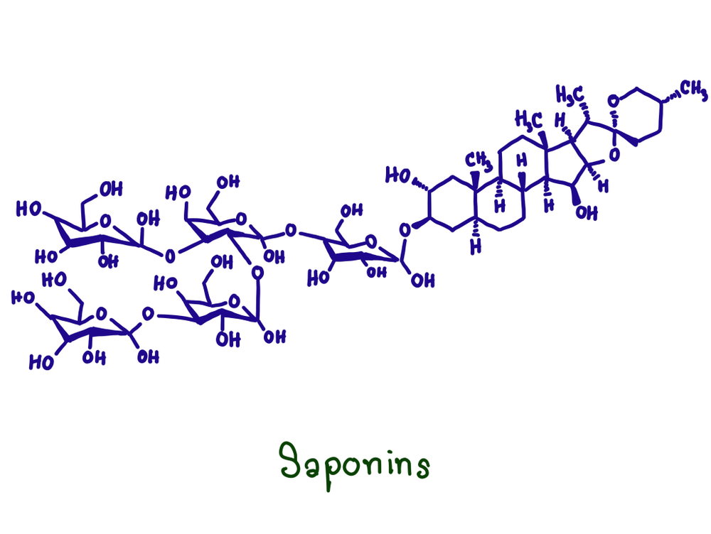 Chemical structure of saponins