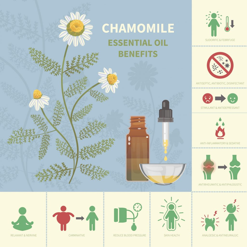Most important benefits of chamomile