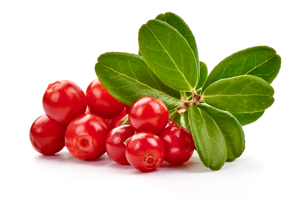 Lingonberry fruits