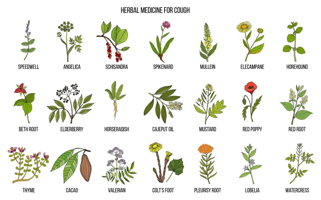 Most commonly used natural herbs for cough