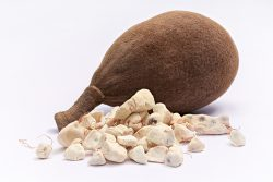 Baobab fruits – medicinal properties, nutritional value